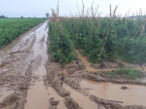 Κομοτηνή Ό,τι γλίτωσε από το χαλάζι απειλείται από την βροχόπτωση